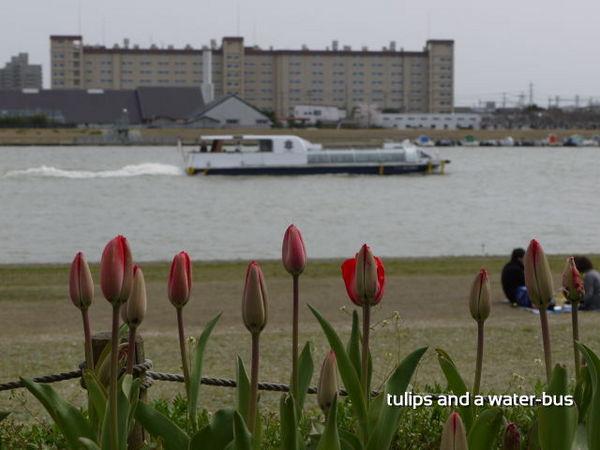 チューリップと水上バス.jpg