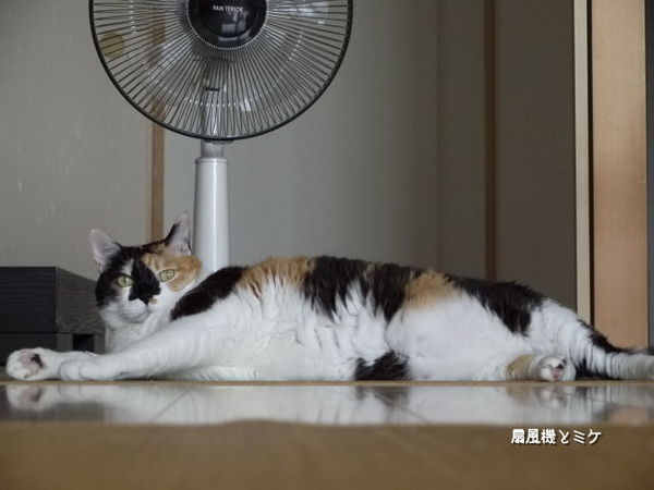 ミケと扇風機.jpg