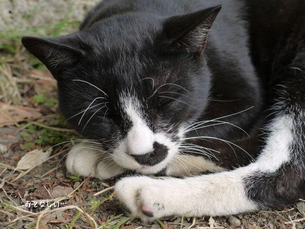 上杉神社で出逢った猫.jpg