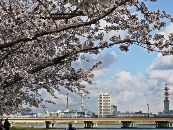 八千代橋.jpg