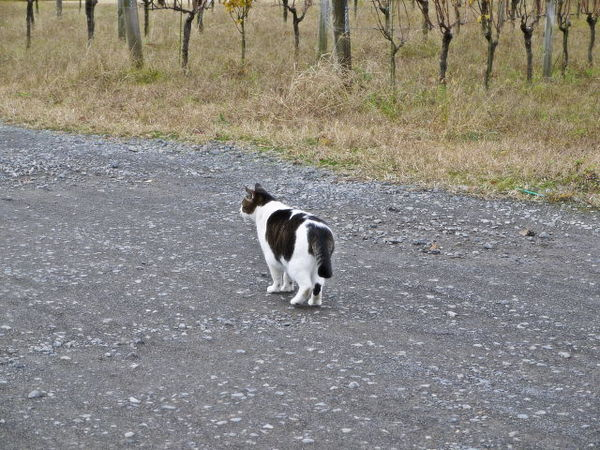 猫発見.jpg
