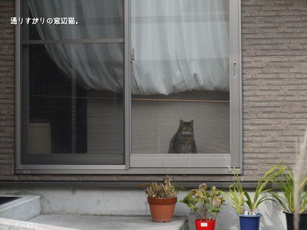 通りすがりの猫.jpg