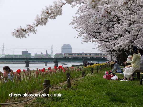 電車と桜.jpg